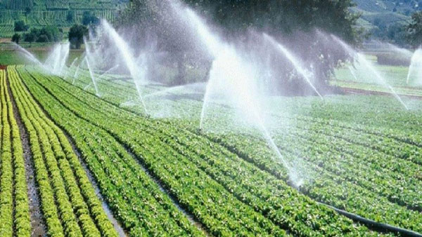Đặc điểm máy bơm nước phục vụ nông nghiệp và tiêu chí lựa chọn