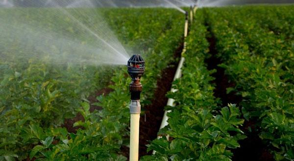 Máy bơm tưới cây trồng là gì? Ưu điểm của máy bơm nước tưới cây trồng