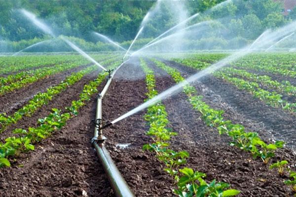 Những điều cần biết về motor bơm nước nông nghiệp