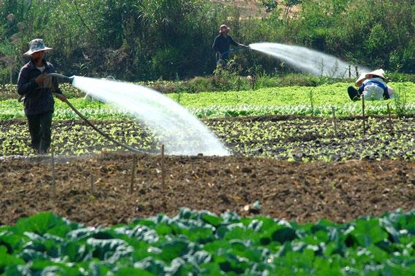 Tìm hiểu chi tiết về loại máy bơm nước tưới ruộng hiện nay