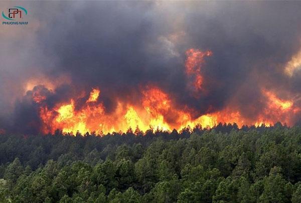 Dự án phòng cháy chữa cháy rừng - Phòng tránh rủi ro cho mùa khô