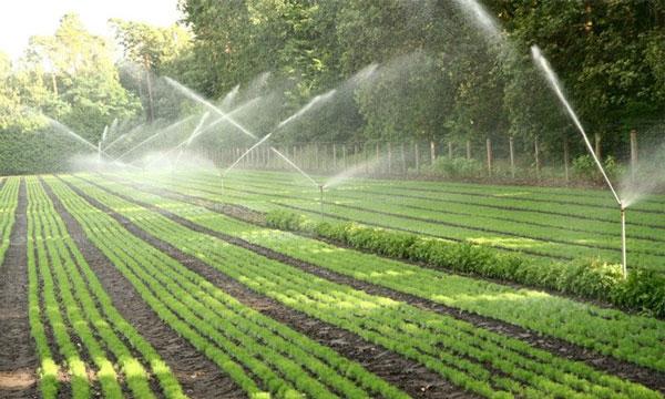 Hướng dẫn cách lựa chọn máy bơm nước tưới cây công nghiệp